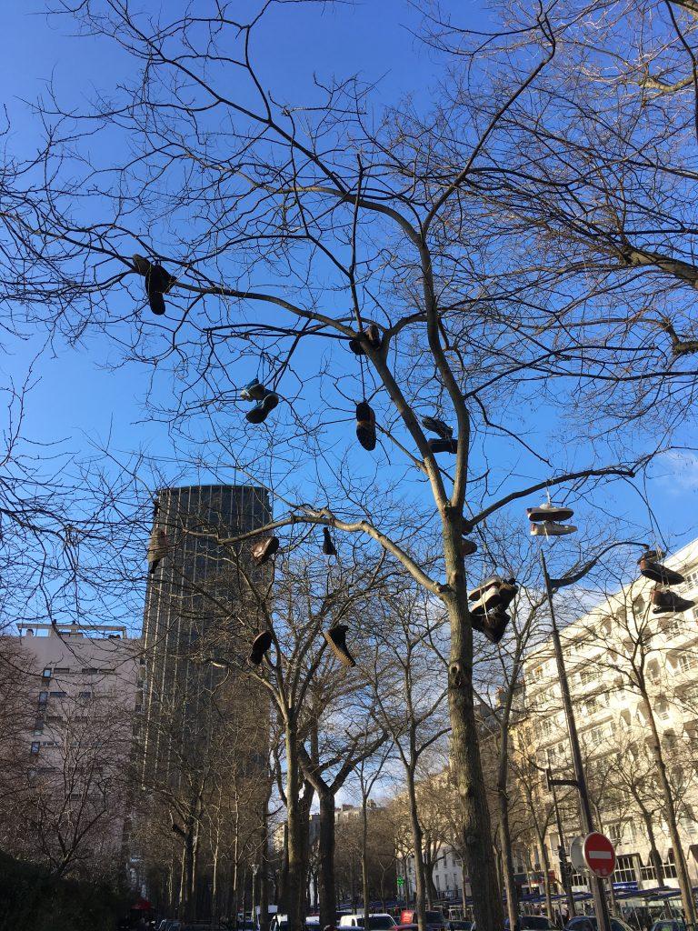 Arbre à chaussures, boulevard Edgar-Quinet, Paris, janvier 2020
