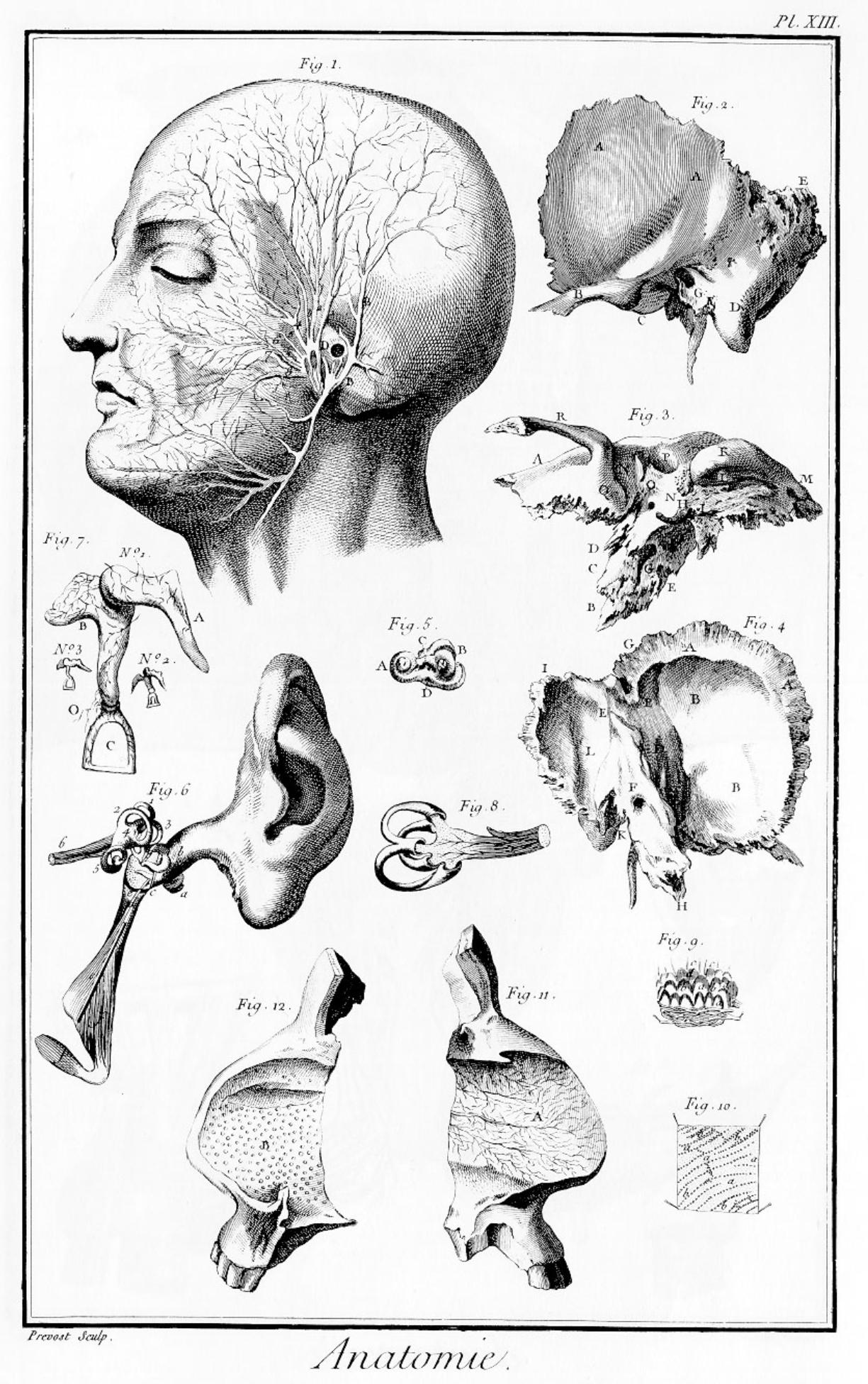 «Anatomie», gravure de Prevost, premier volume des planches de l'Encyclopédie, Paris, 1762